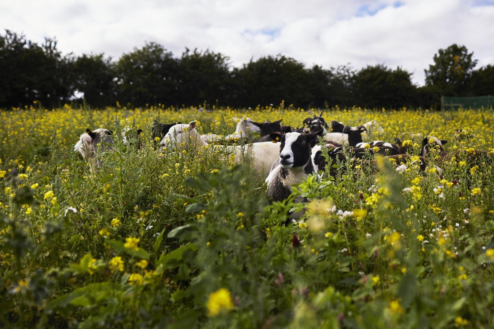 Melilot Farm curtesy of Natoora