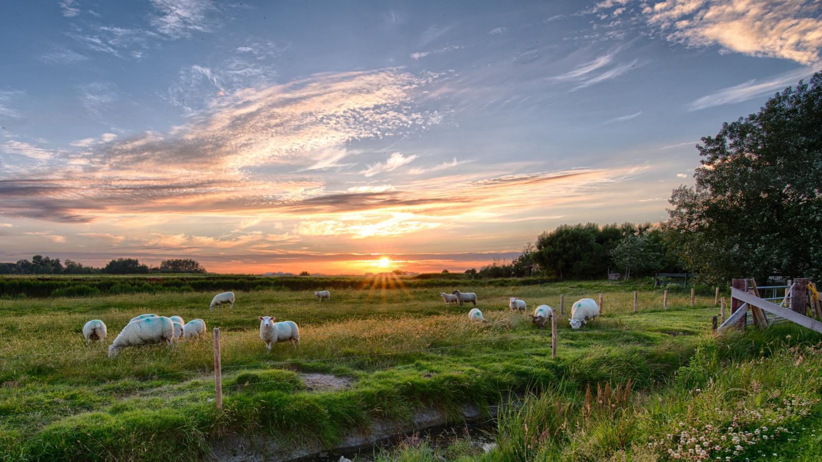 Sheep on grassland. Photo credit: Pexels