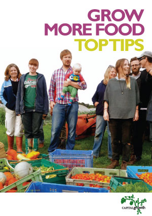 Grow More Food: Top Tips