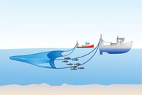 Pelagic or mid-water trawling