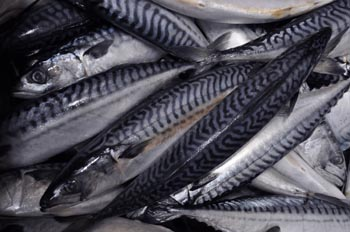 Mackerel removed from 39 fish to eat 39 list sustain for Oily fish list
