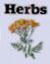 Wenlock Community Herb Garden sells herbs to restaurants