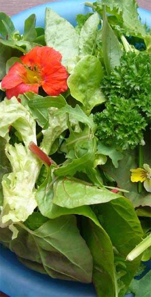 Growing Communities salad