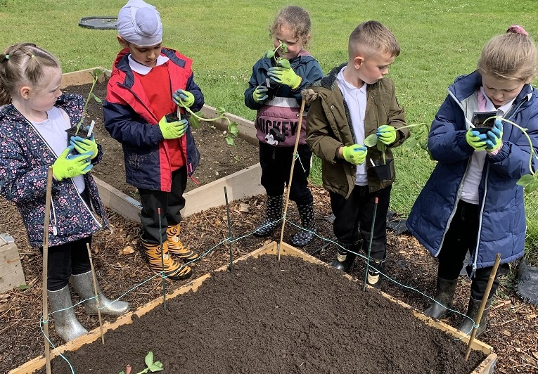 Pupils planting in eth school allotment. Credit: Grimes Dyke Primary School