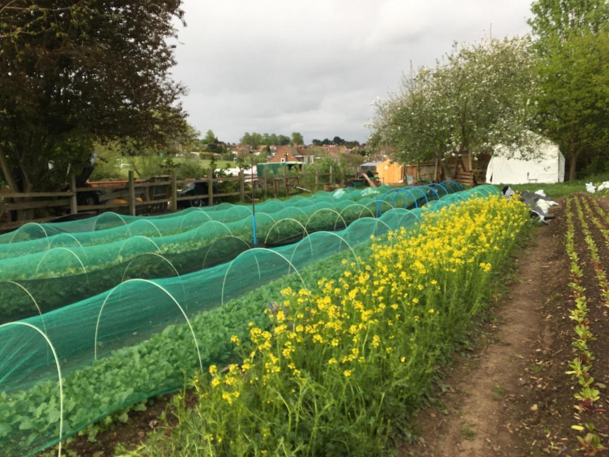 Keats Organics: Opening their gates this Urban Food Fortnight