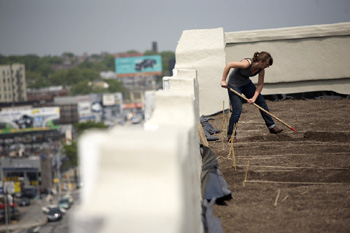 Rooftop food production at Brooklyn Grange Farm in New York
