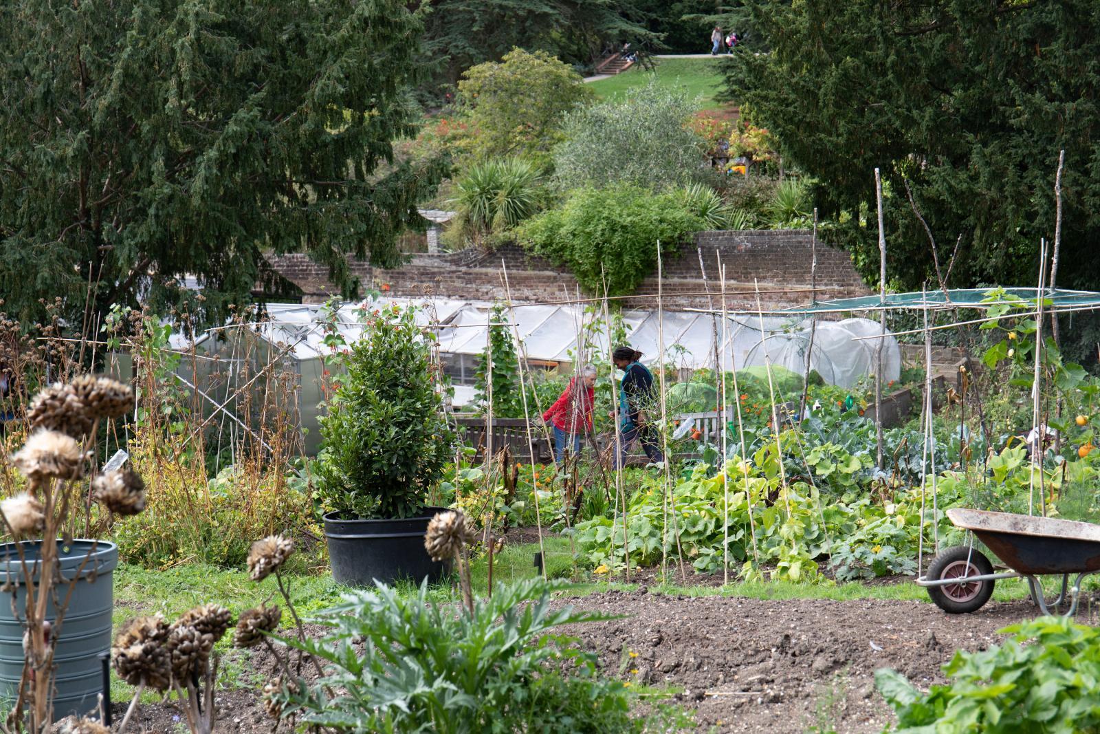 Streatham Community Garden. Photo credit: Zoe Warde-Aldam