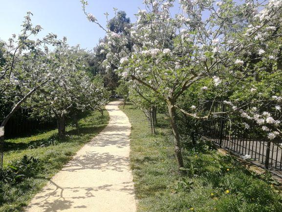 Community orchard, hackney, London, credit v hird