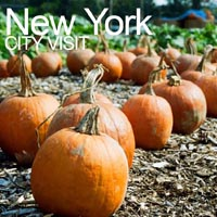 City visit to see food growing projects - New York