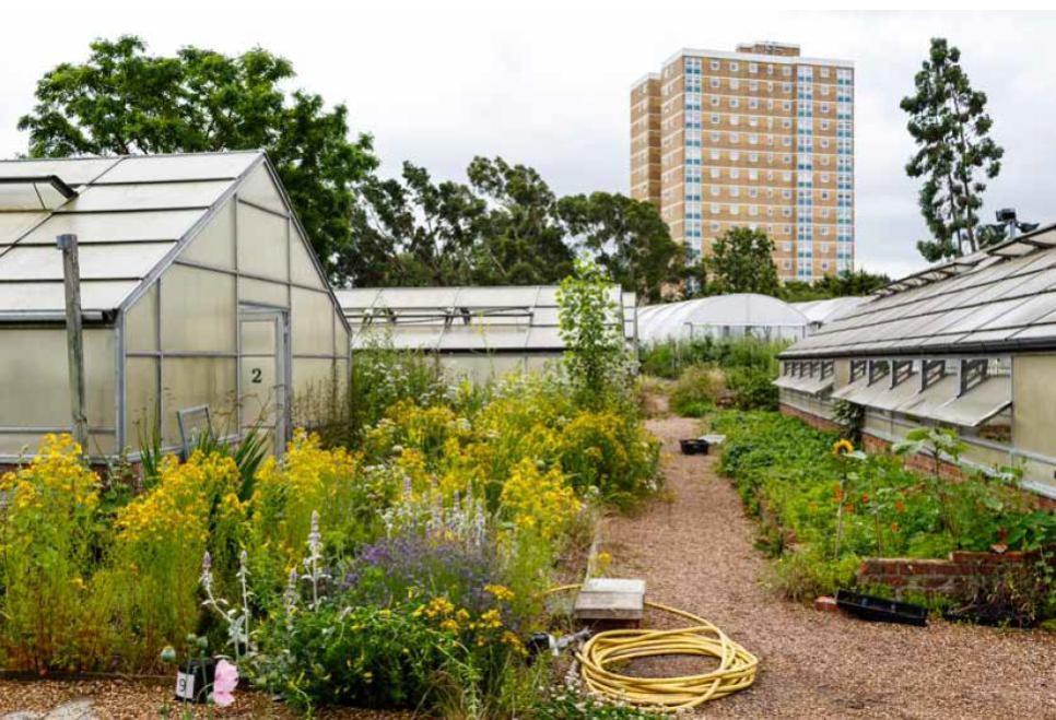 Dagenham Farm by Captial Growth