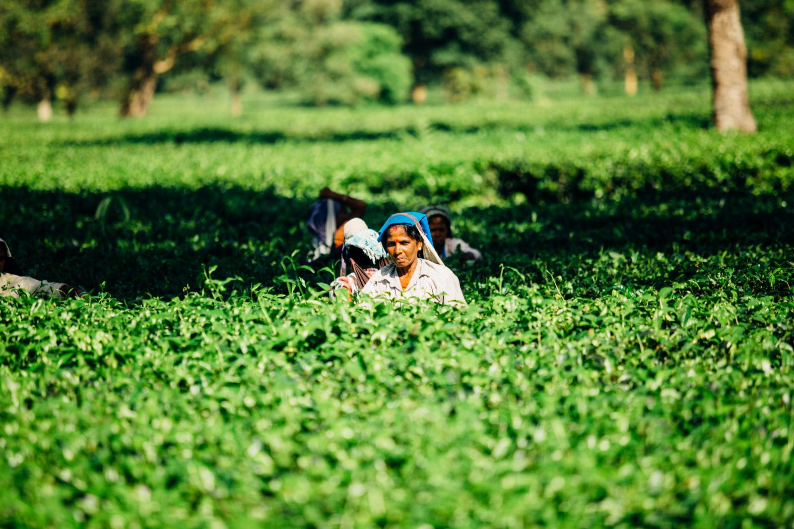 Farm workers in India. Photo credit: Pexels