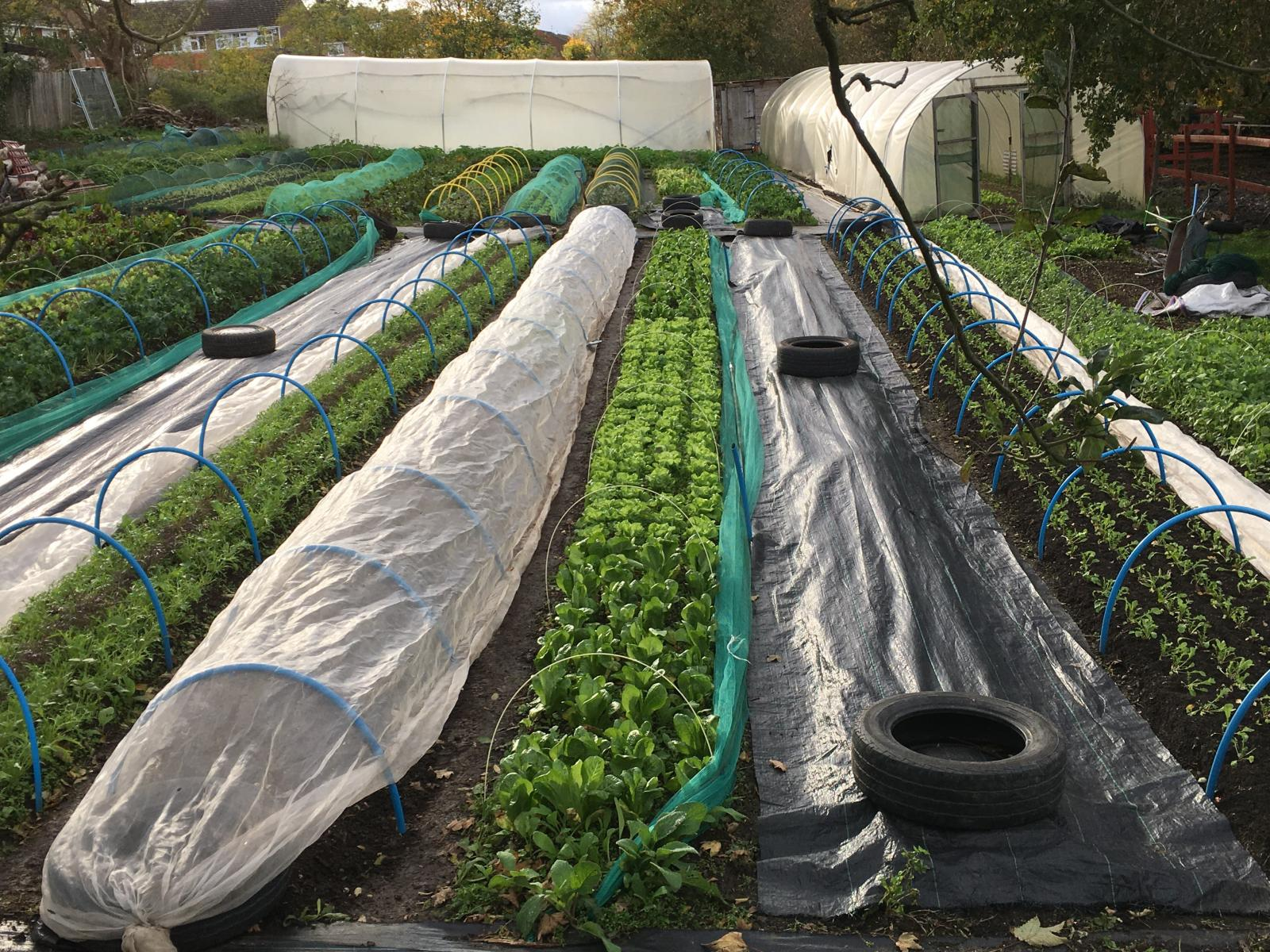 Photo credit: Keats Organics Farm