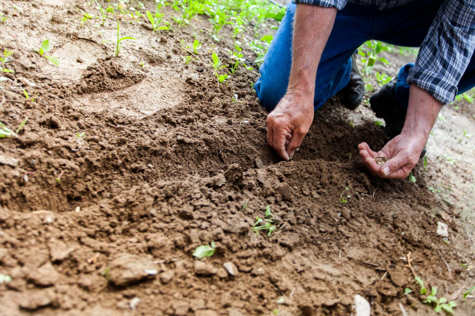 Man planting seeds. Photo credit: Pexels