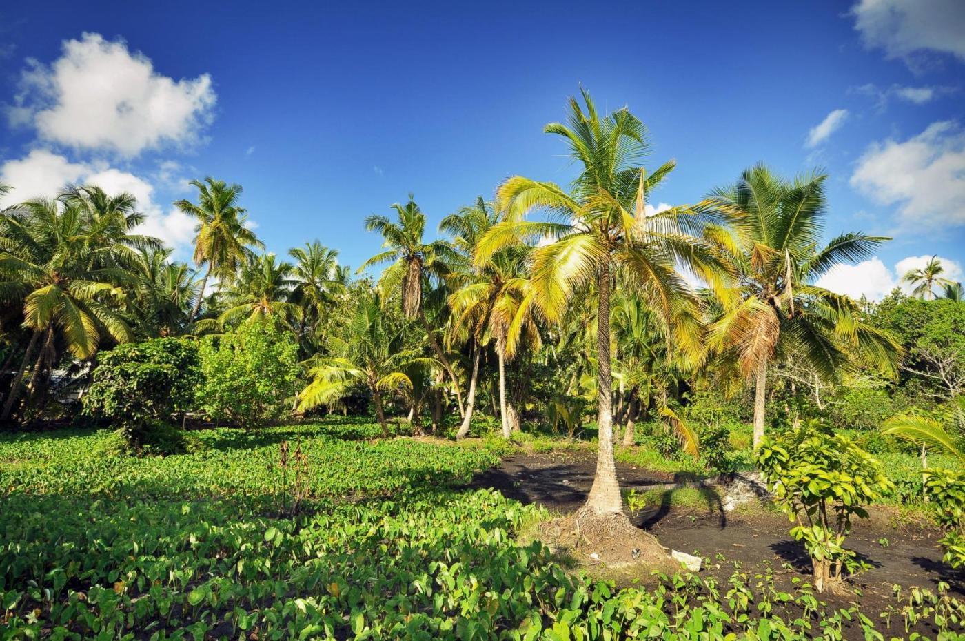 Palm trees. Photo credit: Ibrahim Asad pexels.com