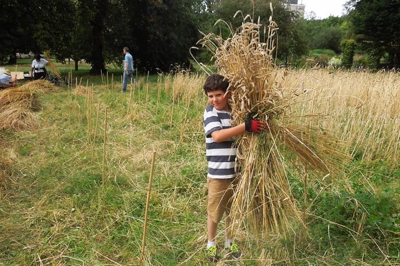 Wheat harvest 2016 by Andrew Forbes / The Brockwell Bake Association