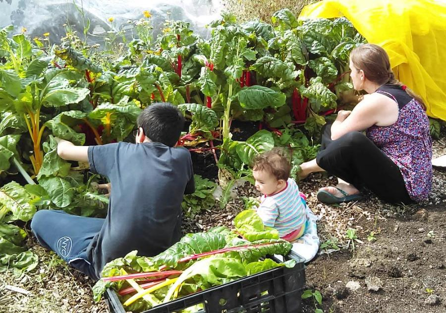 Family picking their vegetables at Constable Community Allotment. Credit: Hull Food Partnership