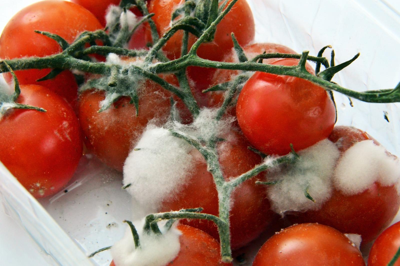 Mouldy tomatoes. Photo credit: Pixabay