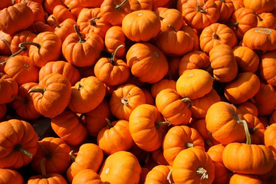 Pumpkins by Inna Heasley / Pexels. Copyright free