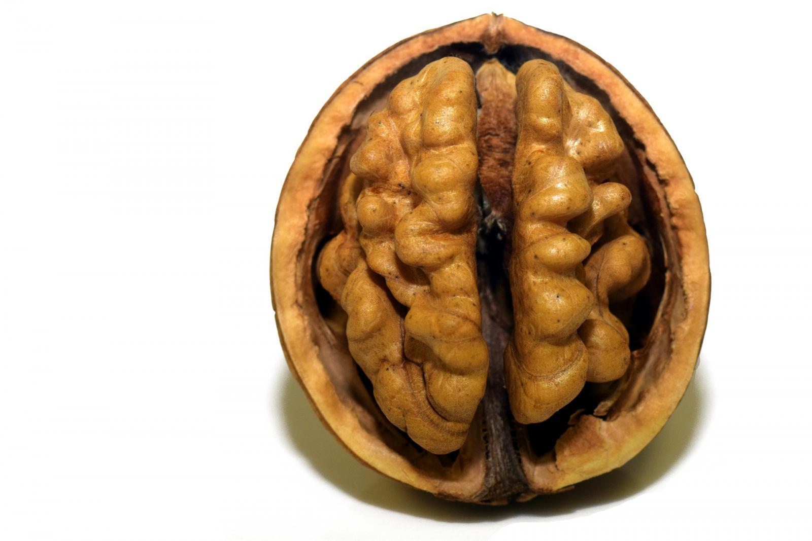 Walnut. Photo credit: Pixabay