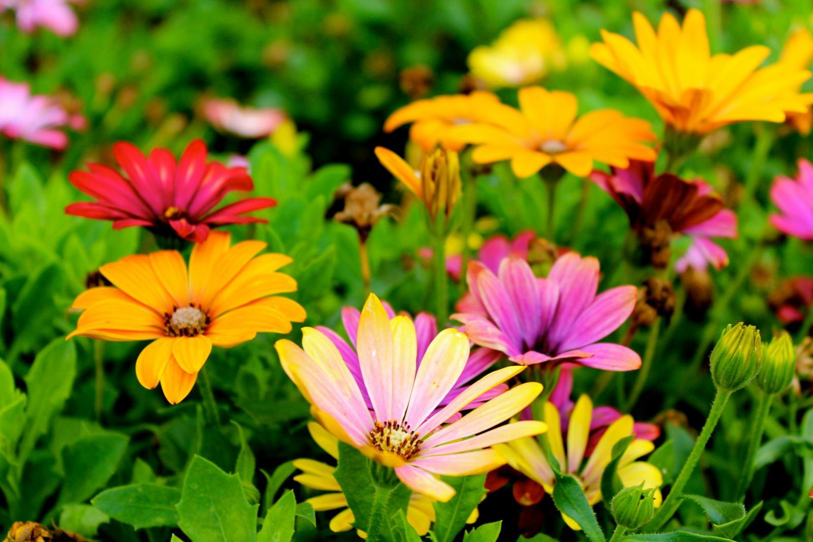Assorted colour flowers. Photo credit: Pexels