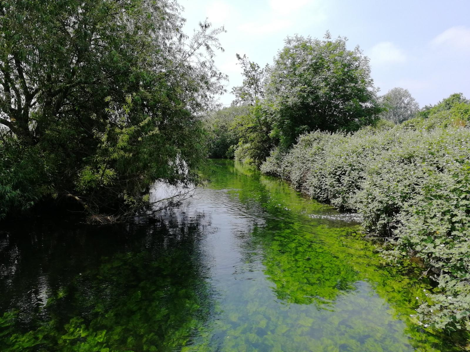 chalk Stream, UK Credit V Hird