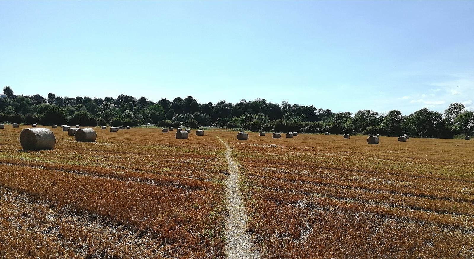 Cropped field, photo credit: Vicki Hird