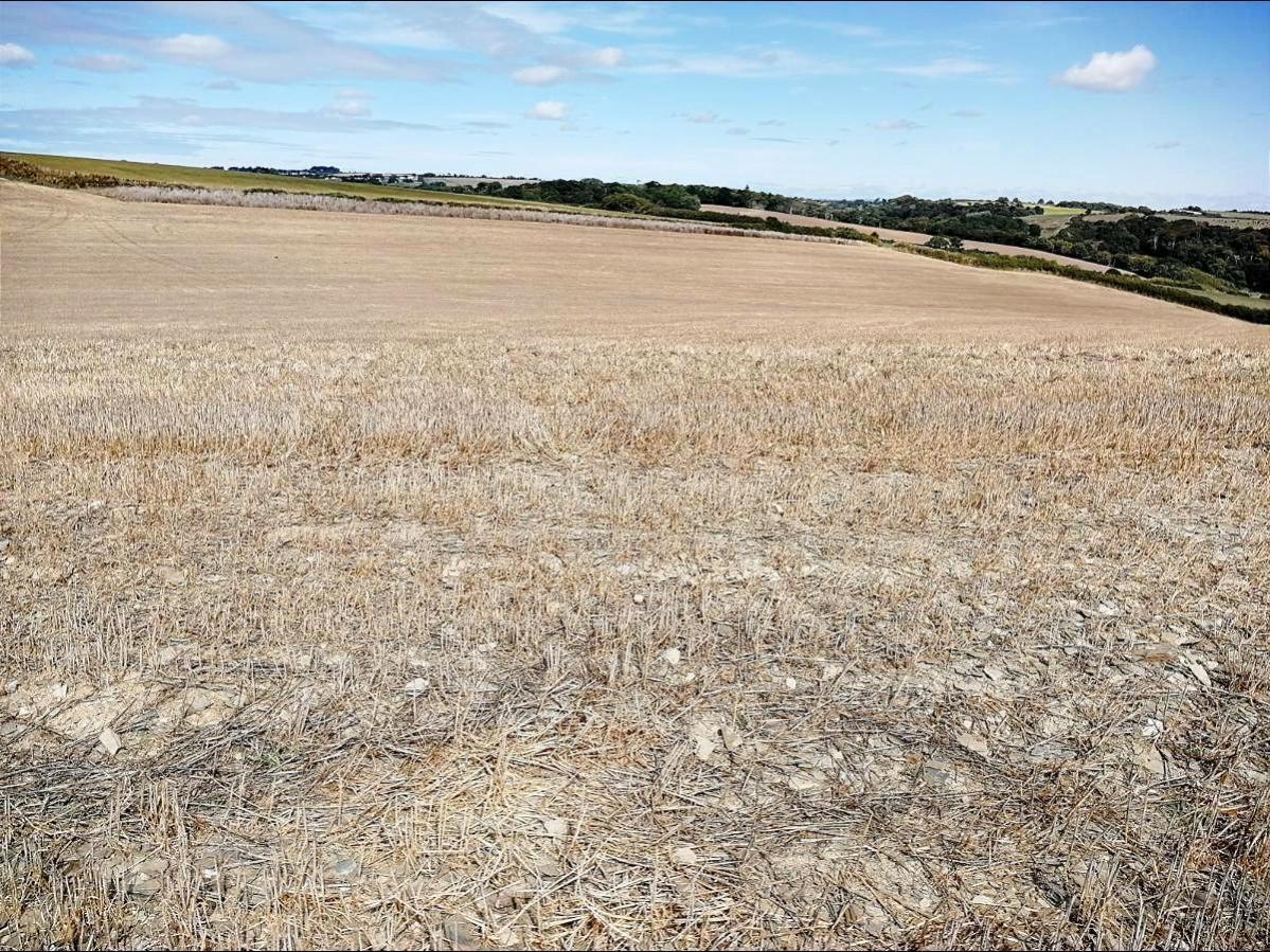 parched soil c Vicki Hird