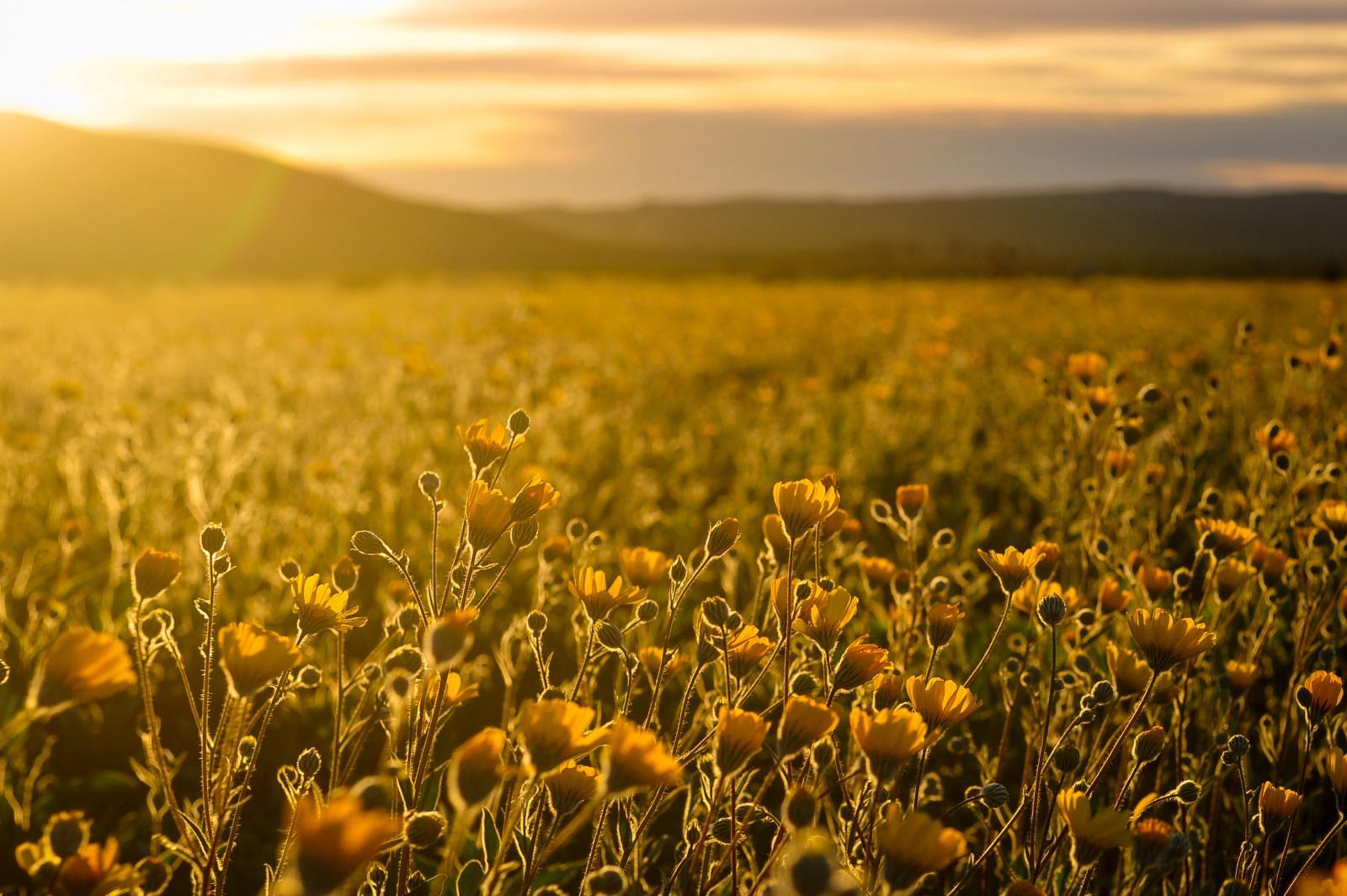 Field of flowers. Photo credit: Pexels