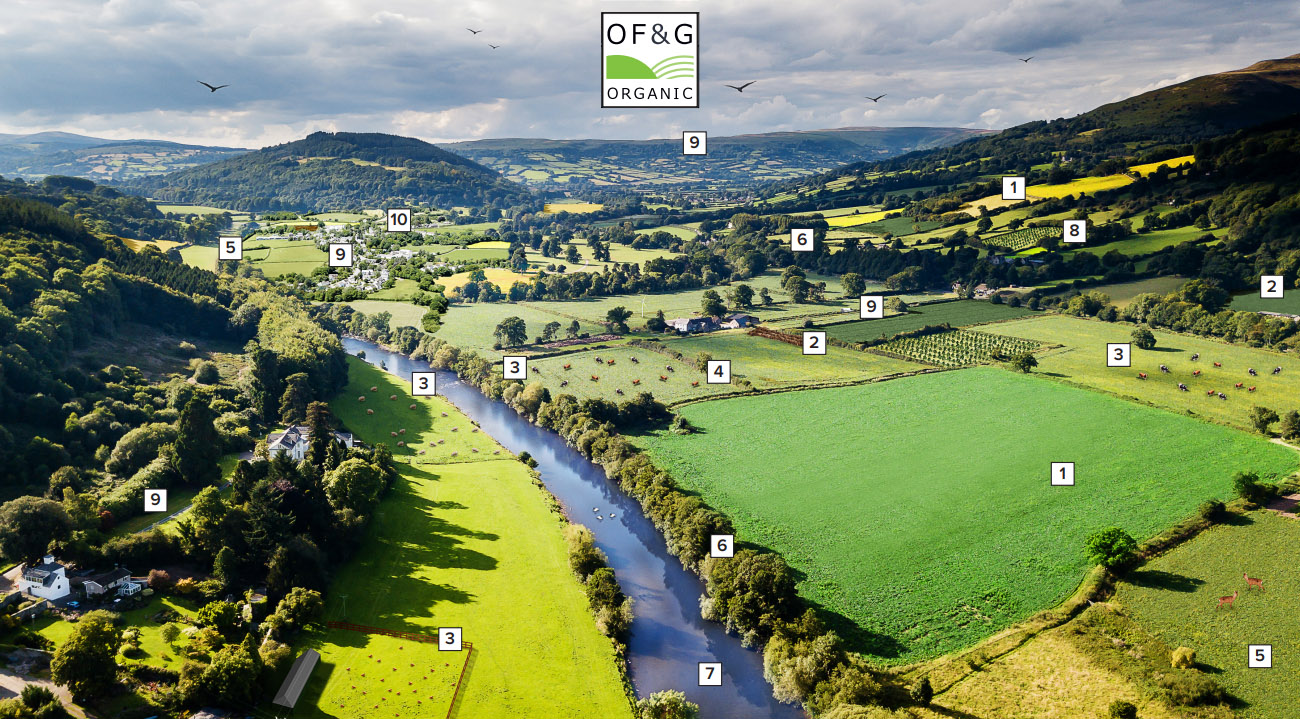 Photo credit: Land sharing model by Organic Farmers & Growers (download the illustration and description below)