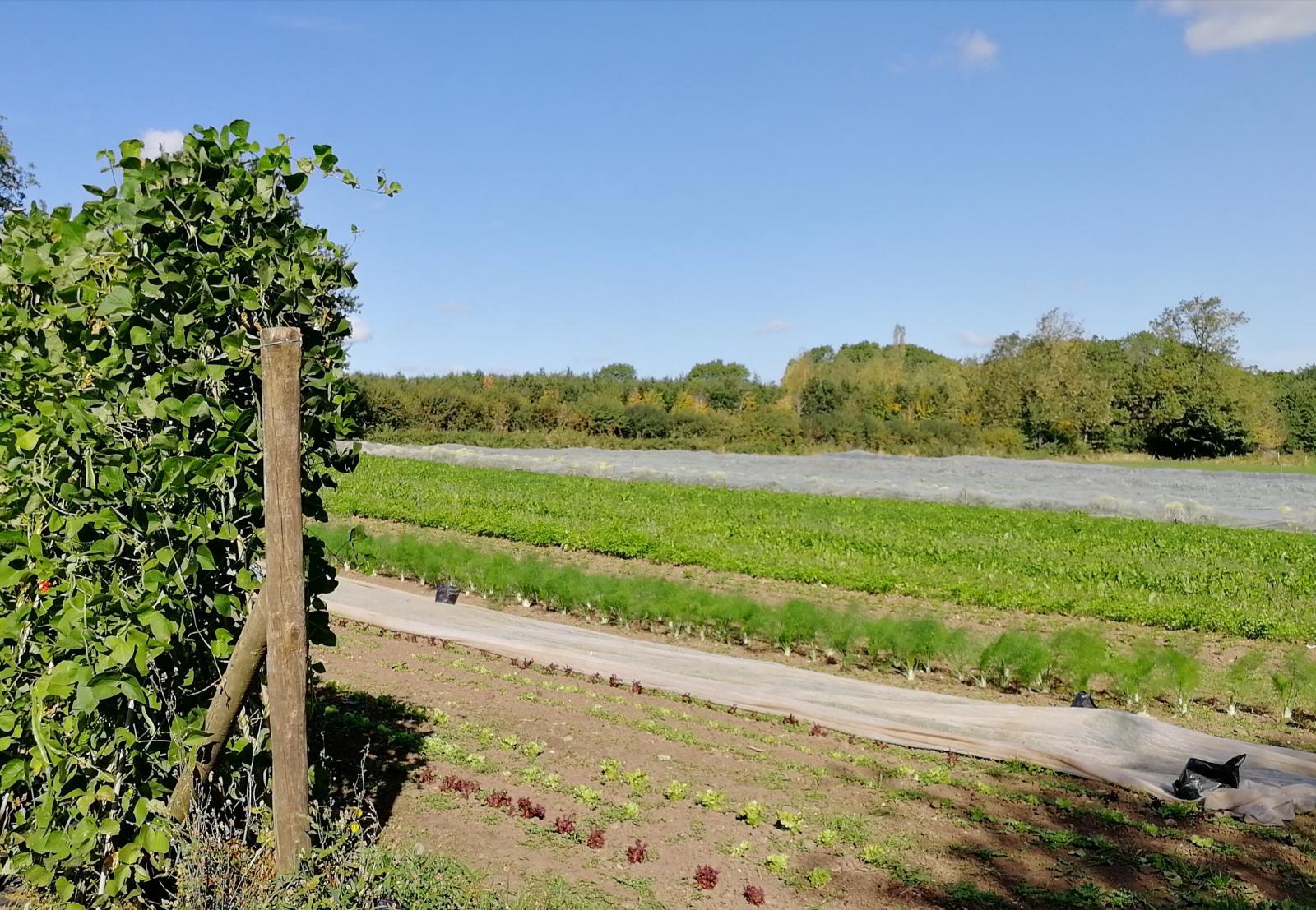 Organic farm. Picture credit: Vicki Hird
