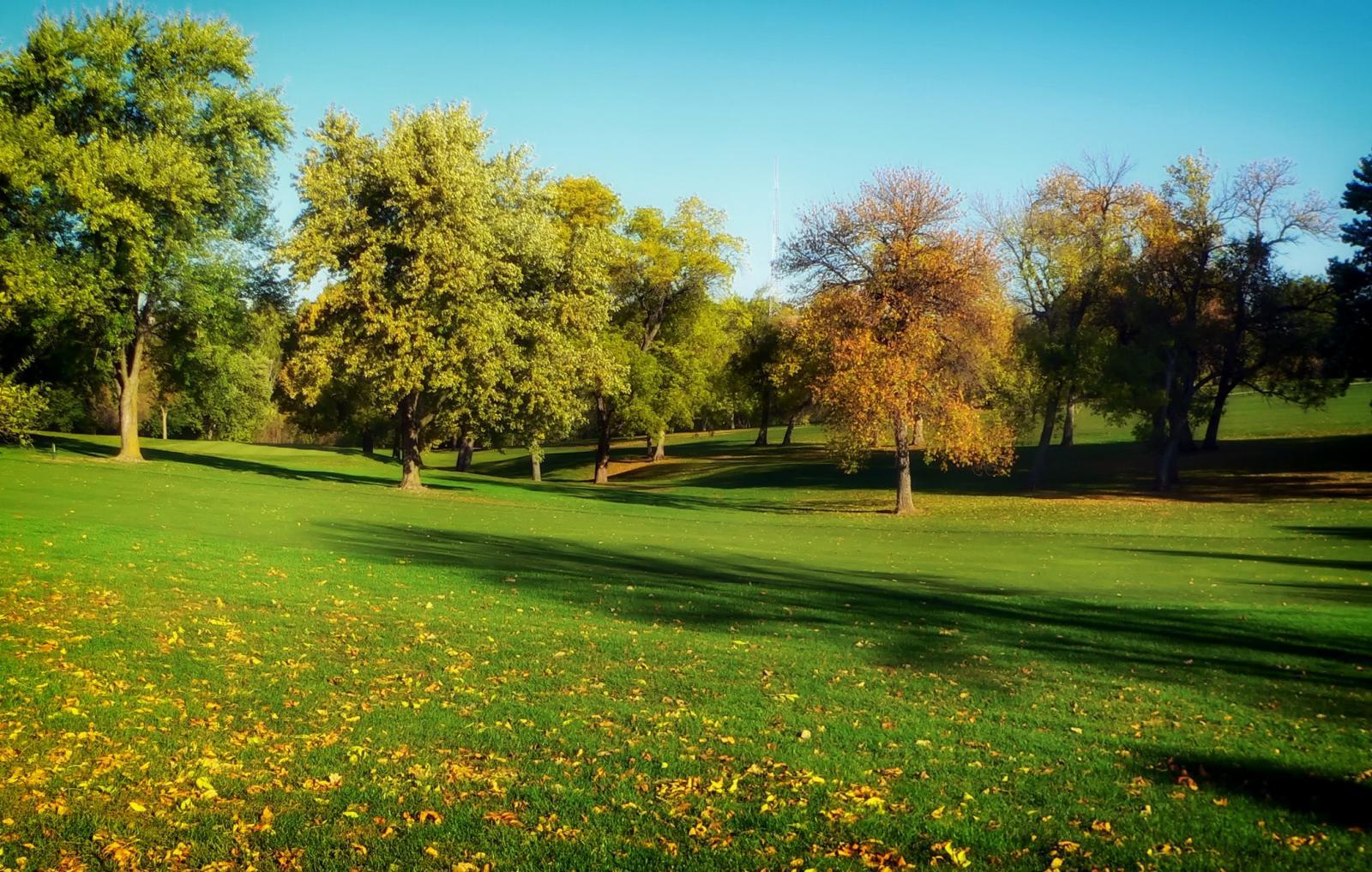 Parkland. Photo credit: Pexels