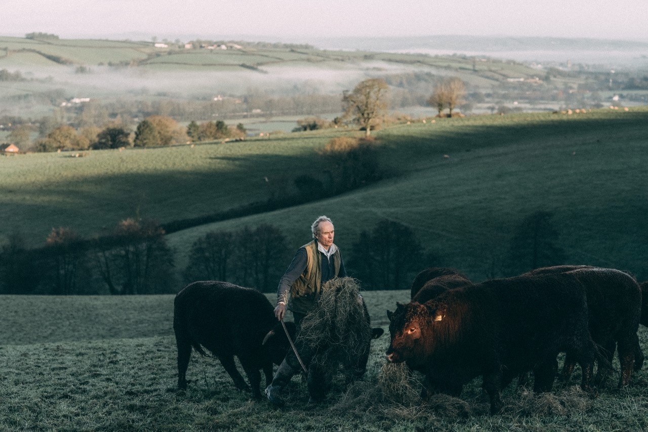 Peter feeding native Red Ruby cattle haylage. Credit: Pipers Farm