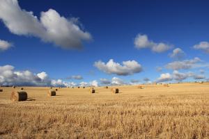 Hay bales. Photo credit: Sustain