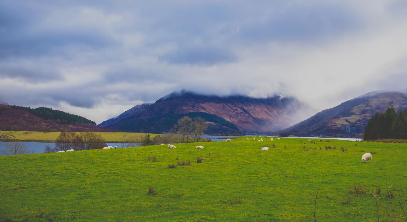 Scottish fields. Photo credit: Pexels