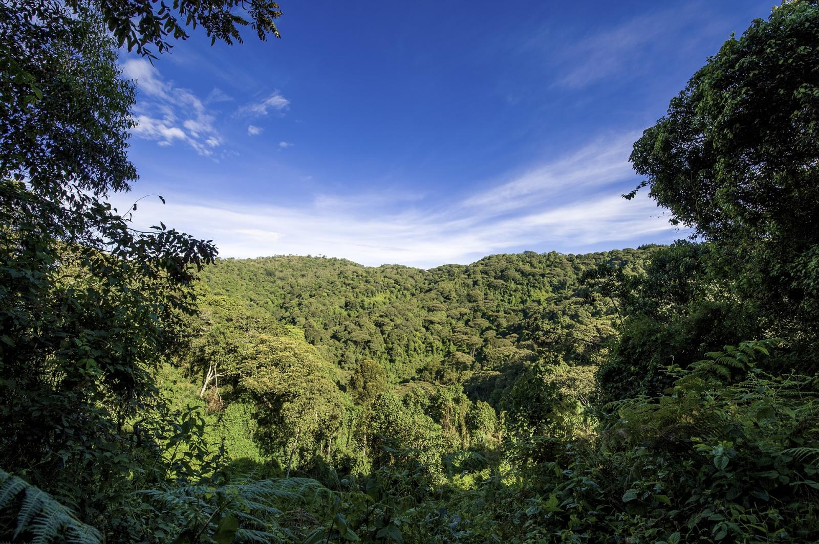 Ugandan jungle. Photo credit: Pixabay
