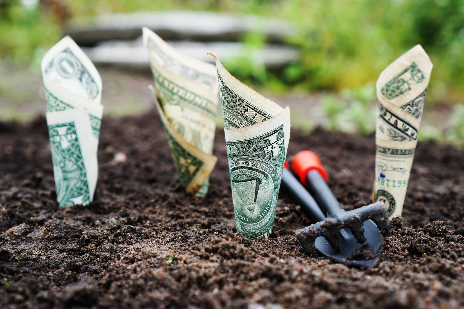 Bank notes growing in a field. Photo credit: Pixabay