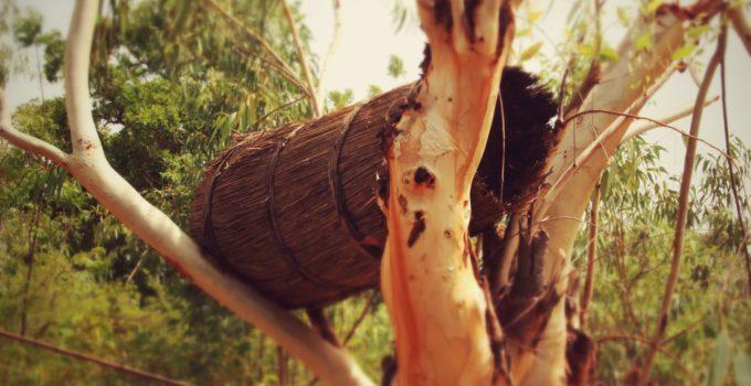 Tapoa honey. Photo credit: Slow Food International