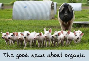 Why I love organic