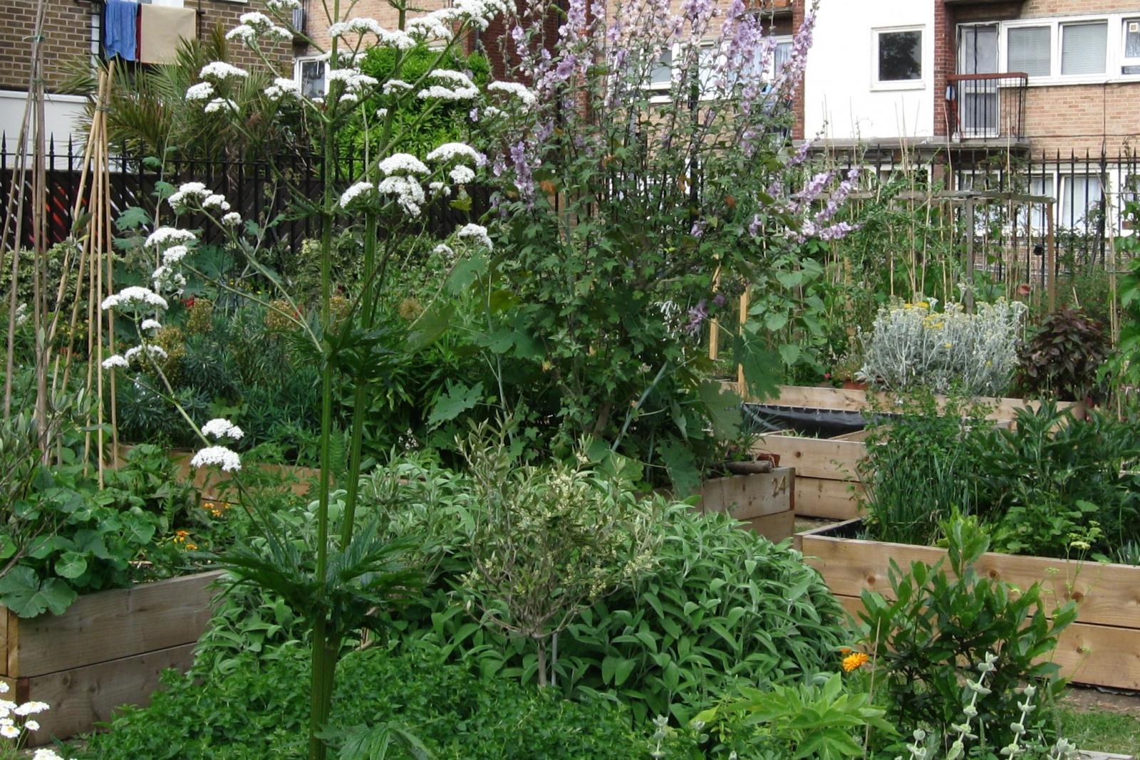 Community growing space, Credit: G Morgan